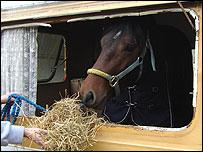 Horse in caravan