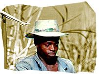 A sugar cane worker on a plantation