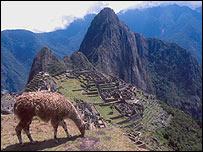 Una llama pastorea en Machu Picchu