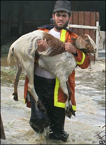 A rescuer carries a goat