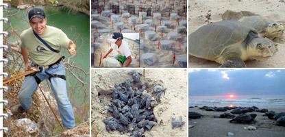 José Ramón Silva Arizabalo y el proyecto para salvar la tortuga lora