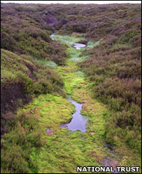 Peat bog. Image: National Trust