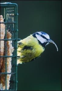 'Freaky beaky' by Solentnews.biz