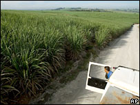 Sugar cane field in Brazil