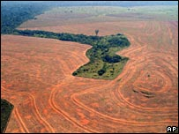 Deforestaci�n en la Amazonia.