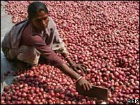 Indian labourer sorts onions