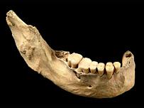 Cave jawbone   Image: PNAS