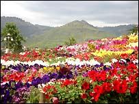 Islamabad gardens