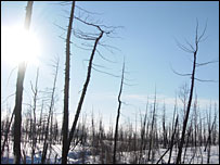 Woods in Norilsk