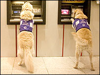 Dogs using a cash point