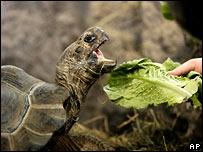 Разнообразие флоры и фауны на Галапагосах вдохновило Чарльза Дарвина. BBC