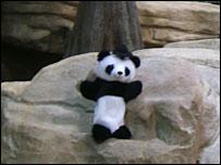 A panda glove puppet