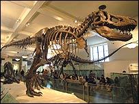 Esqueleto del T. Rex, BBC