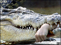 The crocodile holding the severed arm