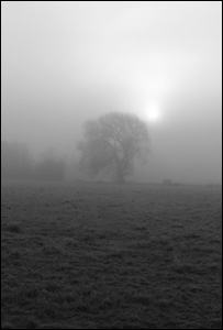 Magor marsh in the mist (Picture by Justin Crook)