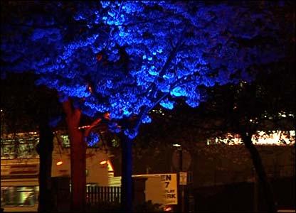 A tree off Albert Street in Digbeth