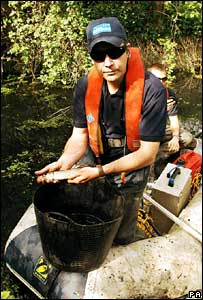 Aquatic scientist Paul Grimsley holds a young Pike caught in the Pudding Mill River