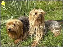 Dermot and Lynn (picture from Celia Hammond Animal Trust)