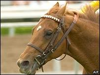 Horse. File photo