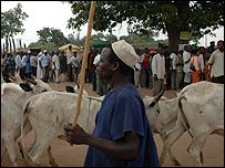 A herder passes in front of voters in Nigeria