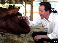 David Cameron and cow