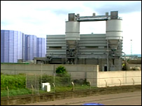 Seafield plant