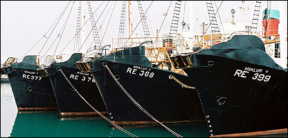 Whaling boats (Image: BBC)