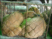 Dogs squashed into cages