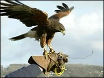 A bird of prey and its handler (generic)
