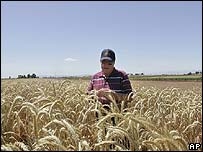 Scientists studying cornfields in California