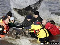 Thames whale rescue effort