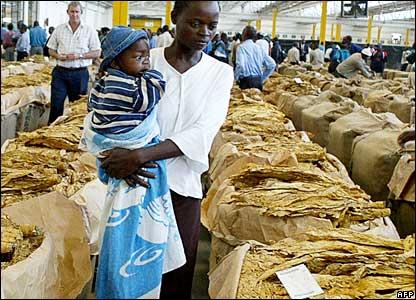 Farmers at Zimbabwe's tobacco sale floors