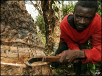 Worker taps latex at rubber plantation, Guthrie, Liberia