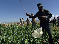 Eradicating poppy farms