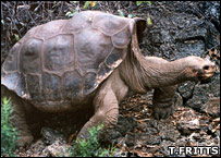Lonesome George  Image: Thomas H Fritts