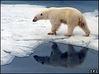 Polar bear on ice. Image: SPL