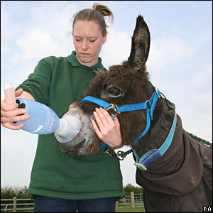 Donkey receives allergy treatment