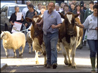 Cows and farmers walking towards Islington Green