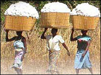 Women carrying cotton bales in Burkina Faso
