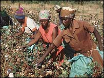 Women picking cotton in Burkina Faso