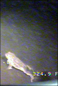 Toad in Loch Ness. Picture courtesy of MIT/Oceans 07