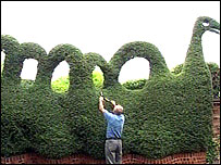 John Dobson trimming his Loch Ness Monster hedge