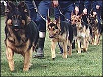 Police dogs in training