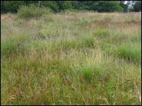 Rhos pasture (picture: Mike Clark)