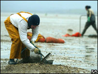 Two cocklers at work on the sands of Morecambe Bay, England (file image)