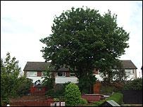 Tree in a street