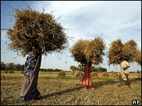 Farmers carry wheat bundles, Allahabad, India
