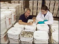 Odyssey co-founder Greg Stemm (L) examines coins recovered from the Black Swan