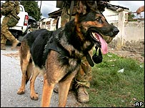 Sniffer dog (archive)