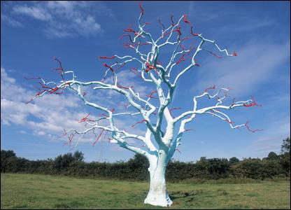 Glamorganshire tree PICTURE Alex Ramsay